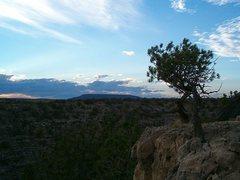 Rock Climbing Photo: A hardy juniper tree on the rim, Jacks Canyon