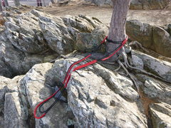 Rock Climbing Photo: Tree anchor point above large crack.  Good anchors...