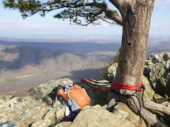 Rock Climbing Photo: View from the top and tree anchor point.