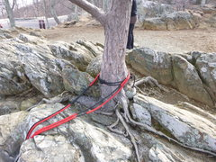 Rock Climbing Photo: Tree anchor.  As you can see in the background the...