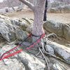 Tree anchor.  As you can see in the background there aren't a lot of available anchors.  A few other trees pretty far from the ledge were available and other trees are closer, but behind the overlook wall.  Some trees were there a little lower, but looked pretty sketchy for an anchor.