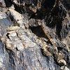 Rock detail, NJC