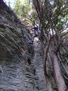 Rock Climbing Photo: Tree bridge