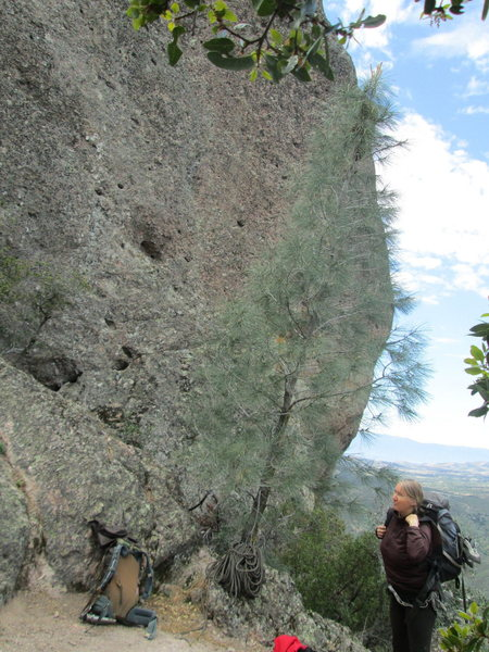 Rock Climbing Photo: first bolt of route is next to the large hole
