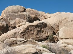 Rock Climbing Photo: Jane's Addiction Wall, Joshua Tree NP