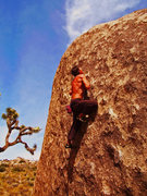 Rock Climbing Photo: Some awesome boulder problem in J-tree