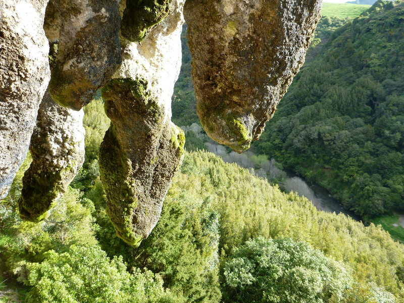 In amongst the stalactites at the top of Angry American (10a) at Mangaokewa scenic reserve.