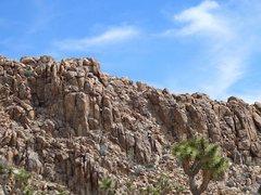 Rock Climbing Photo: The Place Where Sheep Sleep, Joshua Tree NP