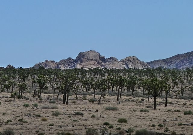 The Super Dome from near Vagmarken Hill, Joshua Tree NP