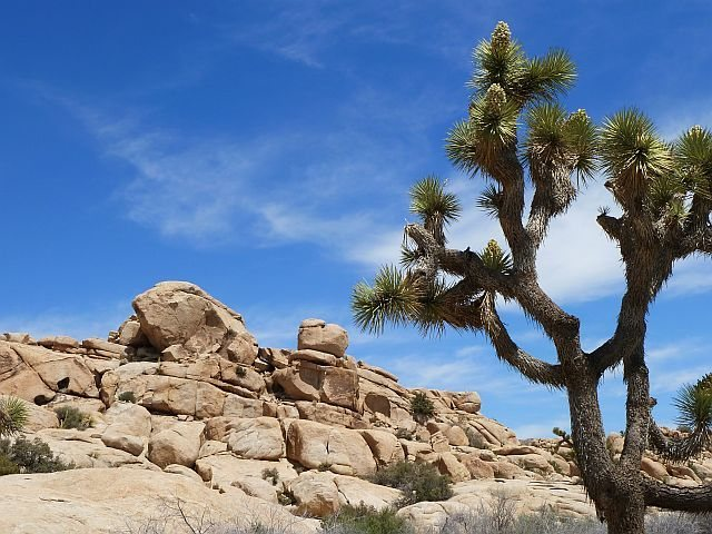 The Sun Bowl, Joshua Tree NP