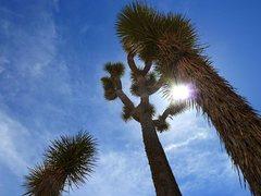 Rock Climbing Photo: Touch the Sun, Joshua Tree NP