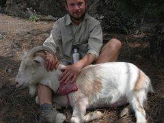 Rock Climbing Photo: Goats!