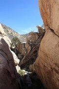 Rock Climbing Photo: Looking south into The Asylum, Joshua Tree NP