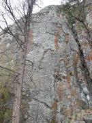 Rock Climbing Photo: Wolly Bully