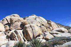 Rock Climbing Photo: Conrad Rock from the approach trail, Joshua Tree N...