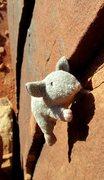 Rock Climbing Photo: crack practice.
