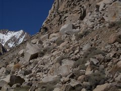 Rock Climbing Photo: Bighorn on the way in to Cyanide Gully