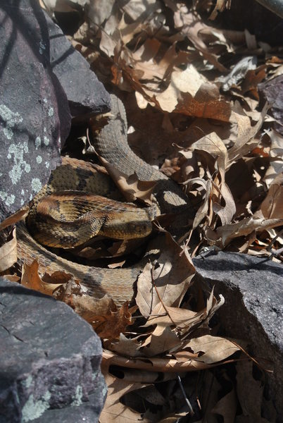 Rock Climbing Photo: Got the Snake Eye over in the boulder field near M...