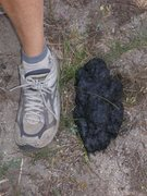 Rock Climbing Photo: Large bear scat by the camprground