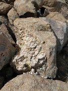 Rock Climbing Photo: Cool rock at the base of The Pet Cemetery, Joshua ...