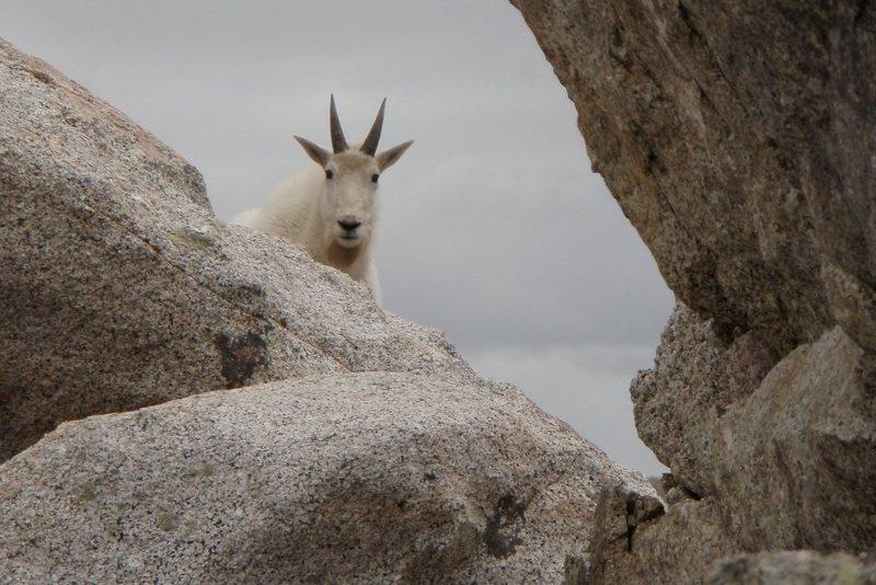 Rock Climbing Photo: goat climb