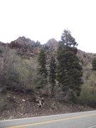 Rock Climbing Photo: Big tree marks the start