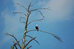 Rock Climbing Photo: Eagle