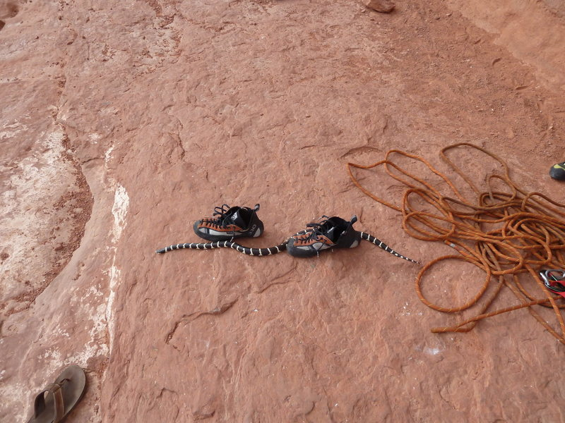 Rock Climbing Photo: self coiling rope