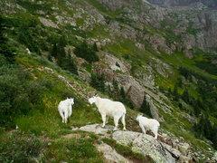 Rock Climbing Photo: Sporting fellows