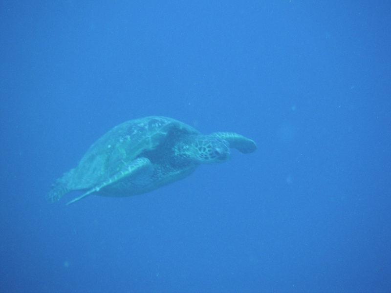 Rock Climbing Photo: Sea Turtle