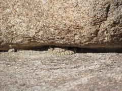 Rock Climbing Photo: Beware of these critters atop the Right Side of Sh...