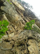 Rock Climbing Photo: Wolfe Wall lower patina and upper chasm. Many attr...