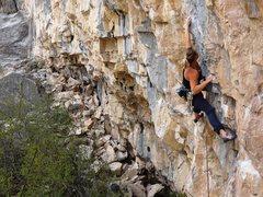 Rock Climbing Photo: Ashley on Mr. Sniff.