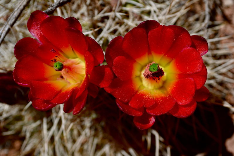 Rock Climbing Photo: Lovely spring blooms.