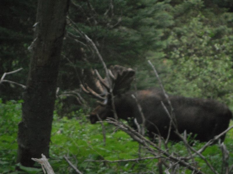 In Grand Teton NP.  It was scary how big he was.