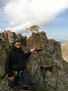 Rock Climbing Photo: Gore Range goat