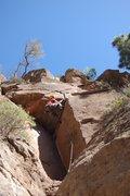 Rock Climbing Photo: Monica diabolica
