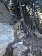 Rock Climbing Photo: Burton at willow canyon