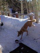 Rock Climbing Photo: Snow on mt lemmon