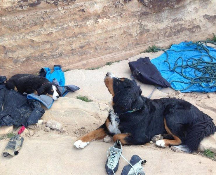 Rock Climbing Photo: Pups