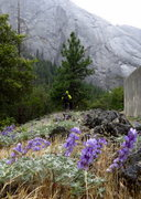 Rock Climbing Photo: Rained out on Hammer Dome. 5/2013.   Photo: Dave S...
