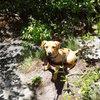 Nova at the base of Laurel Knob. 12 weeks old, 6 mile day, 1,200' of elevation change, no sweat!