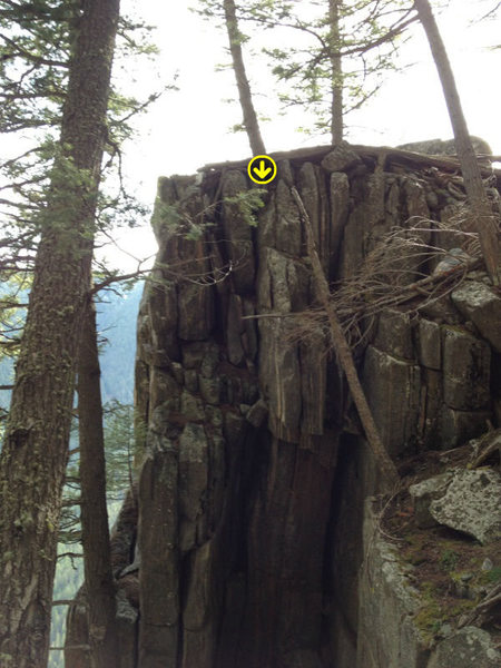 An anchor can be set off of the base of this tree to toprope or clean, easy access hike up to retrieve your anchor.