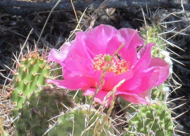 July & cactus blossom.