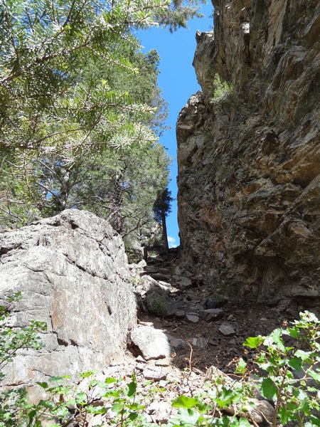 Rock Climbing Photo: Looking up the gully to Independence Wall.