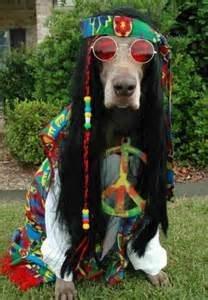 Rock Climbing Photo: Do you smoke Labrador?  (Cheech 'n' Chong)