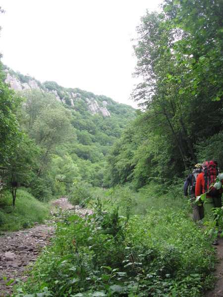 On the trail just up-canyon of the wooden footbridge. The Belidie Inn cliffs are visible on the left (N) side of the canyon.