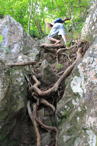 Typical jungle rock/root climbing. When it rains these areas get pretty slick