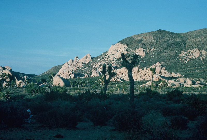Saddle Rocks and Ryan Mountain from the Northwest.