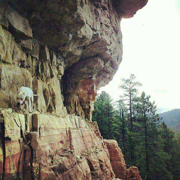 Rock Climbing Photo: Roxi